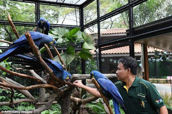 Другие сотрудники зоопарка зовут своего коллегу «Заклинателем птиц