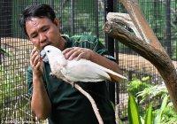 В Сингапуре смотритель зоопарка освоил птичий язык (ФОТО)