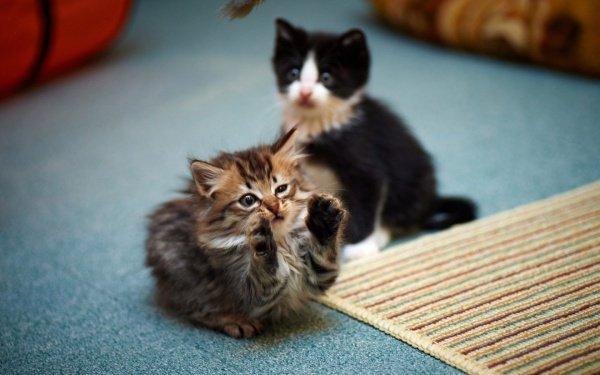 В бесхозной коробке на которую обратил внимание контролер находились сразу 4 котенка