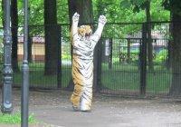 В зоопарке Калининграда полчаса ловили плюшевого тигра (ВИДЕО)