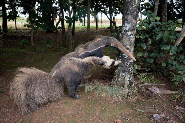 Победу фотографа поставили под сомнение, когда организаторам турнира прислали настоящие снимки чучела животного