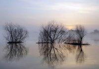 В Тюмени река чуть не сорвала свадьбу