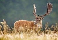 В США гуляют 2 оленя, пронзенные стрелами насквозь