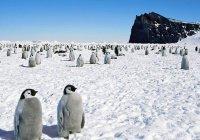 Россиянин может стать первым в мире инвалидом на Южном полюсе
