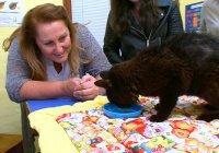В Австралии кошка вернулась домой через 14 лет