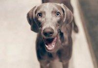 В США собака подстрелила хозяина из пистолета
