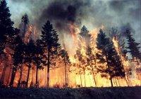 В Хабаровском крае поезд прошел сквозь лесной пожар (ВИДЕО)