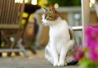 Самая вежливая в мире кошка стала звездой Интернета (ВИДЕО)
