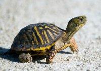 В Московской области черепаха проникла на режимный объект