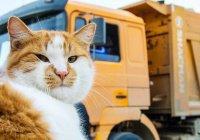 Кот проинспектировал готовность самого длинного моста России