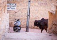 В Индии до смерти забили мусульманина за убийство коровы