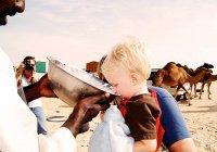 Детское питание из верблюжьего молока появилось в ОАЭ