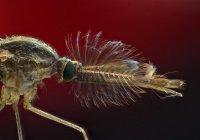 Стало известно о влиянии комариных укусов на организм человека