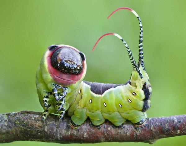 Если же сопоставлять более или менее крупных многоклеточных животного мира Земли, то по массе в нем доминируют насекомые