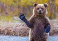 Жителей Омска попросили не дразнить медведей