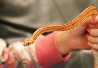 В Англии в коробке с хлопьями нашли змею