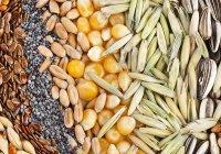 Глобальное потепление вызовет кризис урожая зерновых