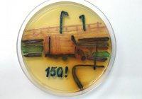 С «моста глупости» в Петербурге написали картину микробами