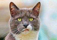 В Новгородской области кот выдал хозяина-должника