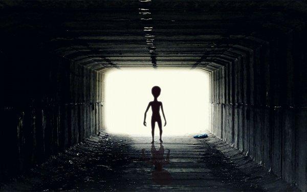 Больше 50 лет исследователи проекта SETI пытаются наладить контакт с внеземными цивилизациями