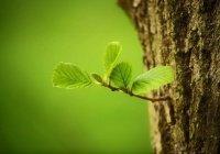 К концу года в России завершат создание «зеленых щитов»