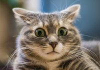 Кота, застрявшего на вершине сосны, спасли в Питере (ВИДЕО)