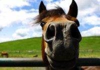 На Камчатке депутат попросил «парковку» для своего коня