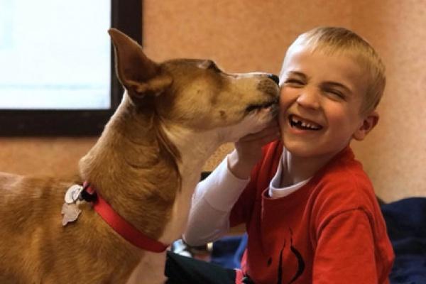 В общей сложности семье Маккон удалось спасти 1050 бродячих псов, собак, от которых отказались хозяева, а также обитателей приютов, где их усыпляют