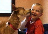 6-летний мальчик из Техаса спас от смерти больше 1000 собак