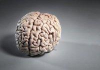 Второй мозг найден в организме человека