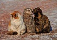 В Канаде 3 кота 22 дня провели в смертельной ловушке