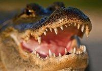В Индии 2 женщины спасли рыбака от крокодила