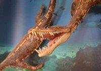 Опасную инфекцию нашли в останках древнего животного