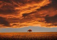 Дерево, которое исполняет все желания