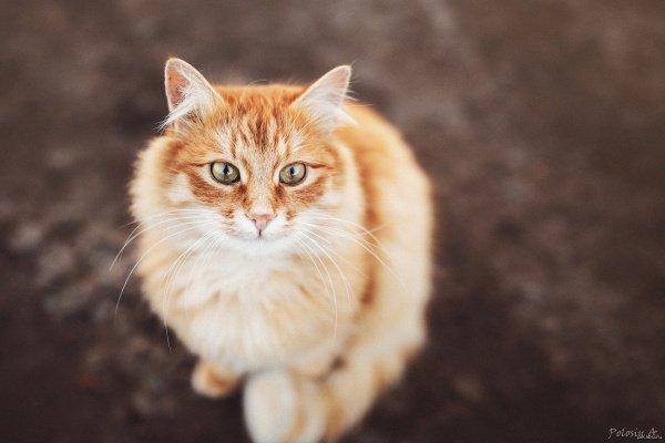 Выбрать имя для животного предложили самим петербуржцам