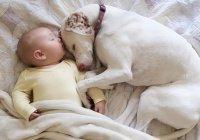 В Омске собака спасла младенца