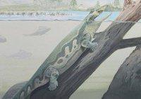 Обнаружены останки древнейших четвероногих животных