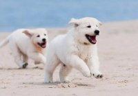 В США 2 собаки устроили побег из детской комнаты (ВИДЕО)