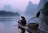 Рыбу с головой голубя поймали в Китае (ВИДЕО)