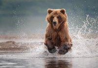 Виртуальная реальность спасет от медведя