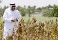 Саудовская Аравия займется развитием сельского хозяйства в Чечне