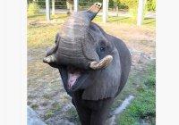 Слон Майкла Джексона совершил побег