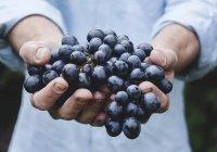 Грузия посадит виноград на Марсе