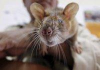 В Индии запечатлели последствия атаки крыс на банкомат (ВИДЕО)