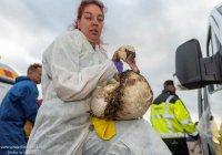 Сотни птиц в Роттердаме пострадали из-за утечки нефти (ФОТО)
