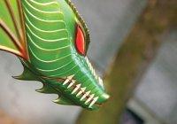В Японии пользователей соцсетей напугали дроном-драконом (ВИДЕО)