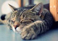 В Англии мошенник потратил полмиллиона на котиков