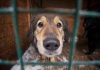 В Иркутске злостные алиментщики работают в собачьем приюте