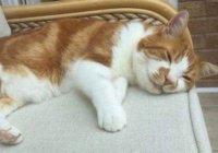 В Англии кот ушел гулять и вернулся через 10 лет