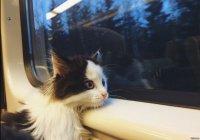 Кошки и собаки смогут сами ездить в поездах РЖД